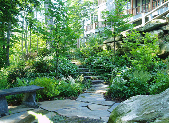 Picture of natural stone walkway with trees and ferns